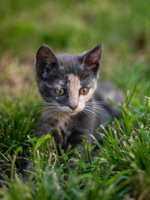 可愛, 可愛的, 好奇的, 小貓 的 免費圖庫相片