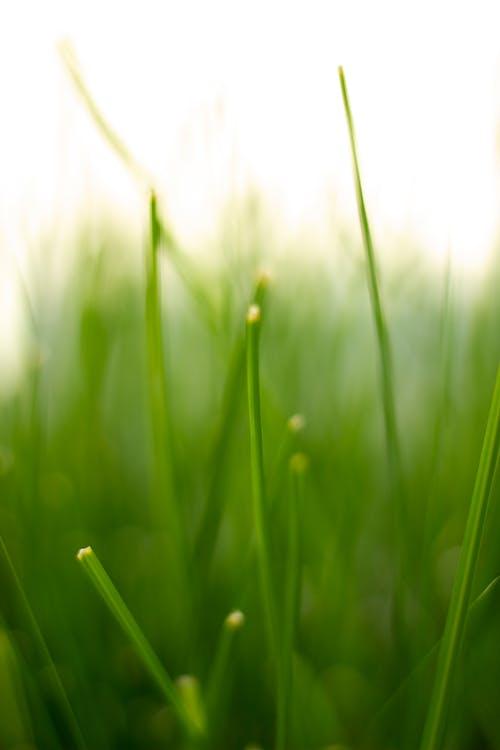 草, 資料圖片 的 免費圖庫相片