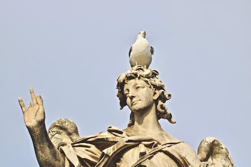 Free stock photo of bird, eagle, statue