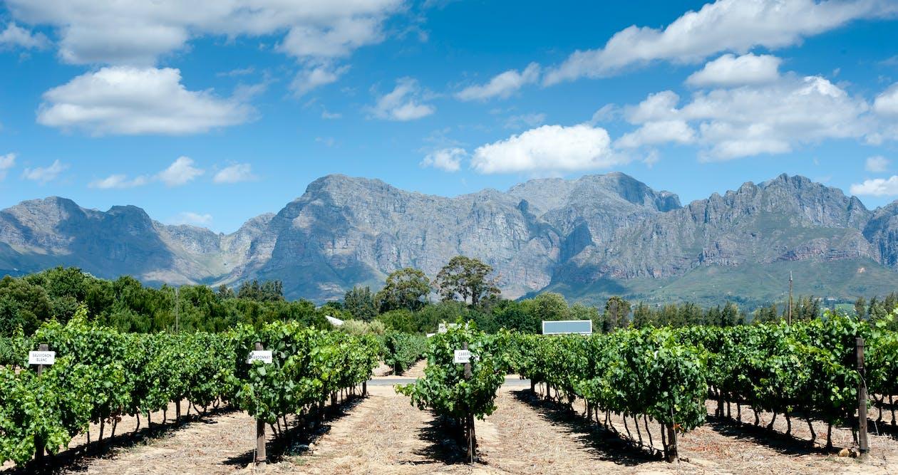 Vineyard Across Mountains