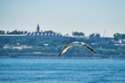 Ilmainen kuvapankkikuva tunnisteilla eläin, Istanbul, kalkkuna, kärpänen