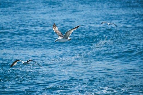 Ilmainen kuvapankkikuva tunnisteilla aallot, eläin, kärpänen, Linnut