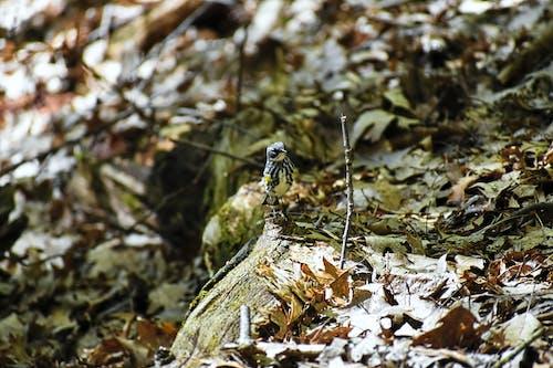 Ingyenes stockfotó kis madár, levelek, madár, őszi levelek témában