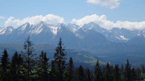 Základová fotografie zdarma na téma cestování, hory, jehličnany, krajina