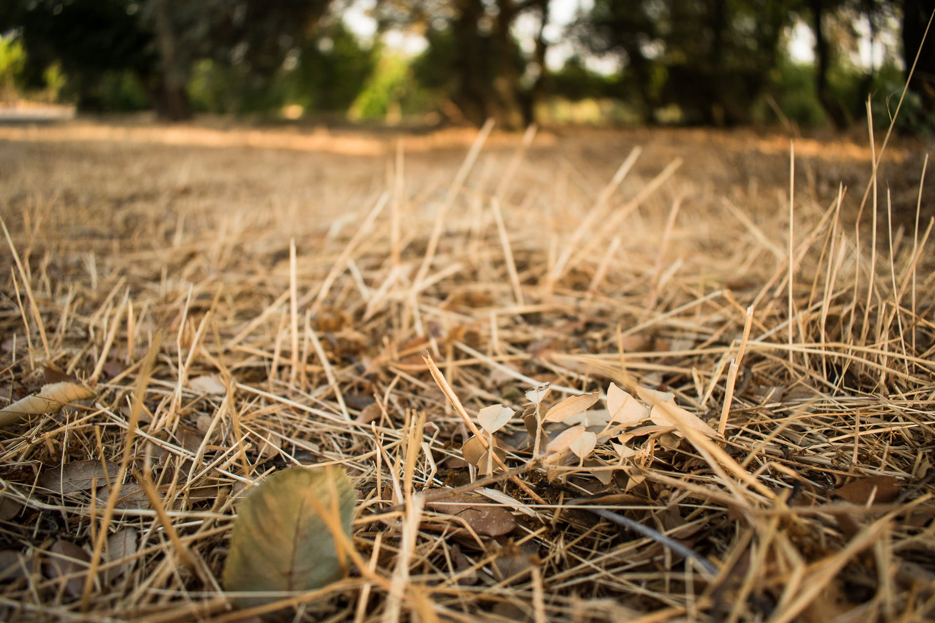 Free stock photo of arid, dry, forest, forest cover