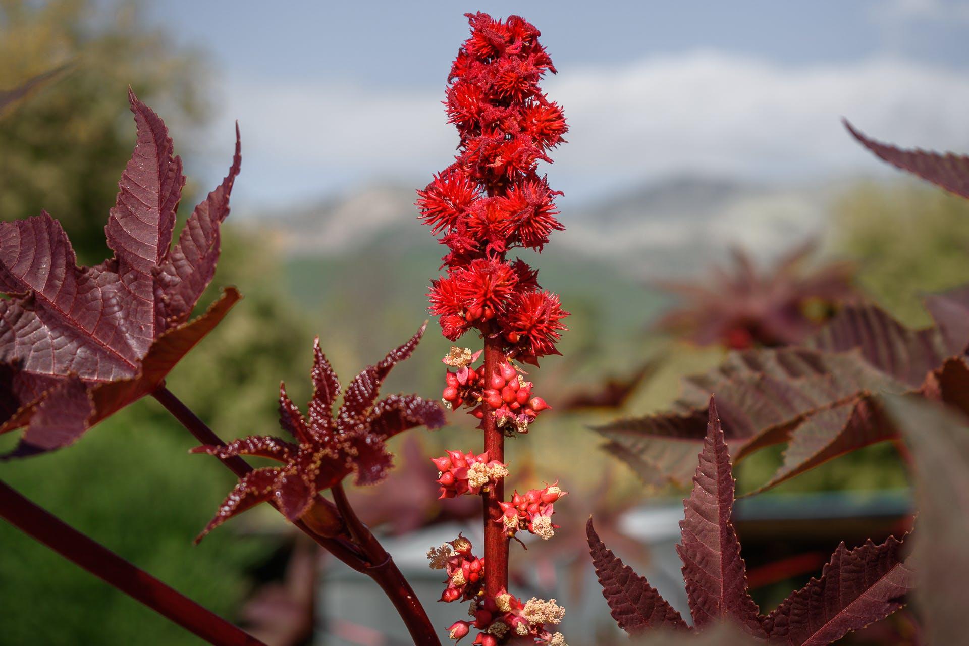 Free stock photo of spring flowred leaf, summer flower, wild flower