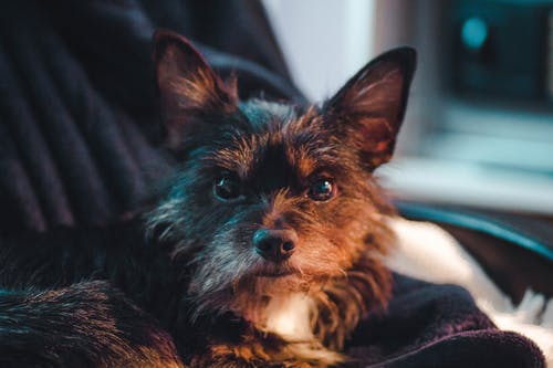 Foto profissional grátis de cachorro preto