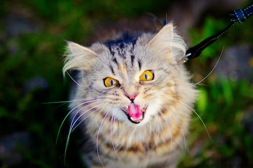 Foto profissional grátis de gato, outdoor, verão