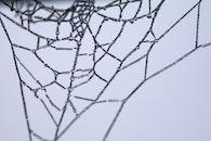 wet, macro, cobweb