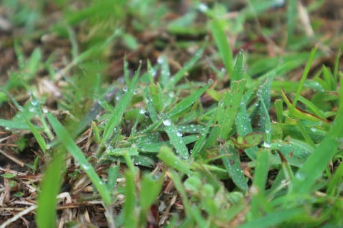 Free stock photo of dew, grass, green