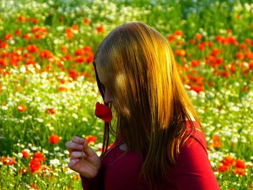 mohnblume, 女人, 女孩, 盛開的鮮花 的 免費圖庫相片
