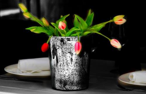 Ingyenes stockfotó asztal, dekoráció, szín, tulipán témában