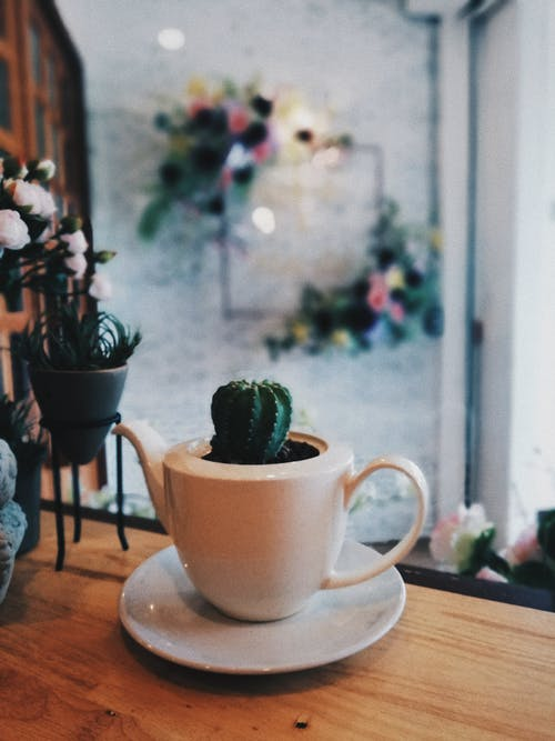 Cactus in Ceramic Cup on Table