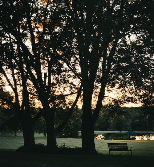 Fotos de stock gratuitas de agua, al aire libre, anochecer, arboles