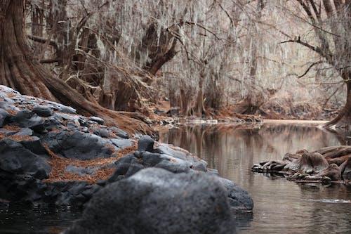 Imagine de stoc gratuită din apă, arbori, curent, mediu