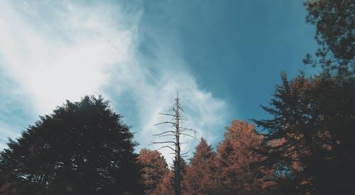Ingyenes stockfotó ég, fák, perspektíva, természet témában