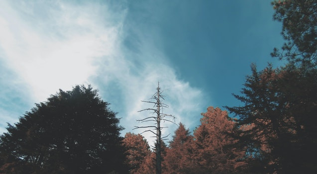 Free stock photo of nature, sky, trees, perspective