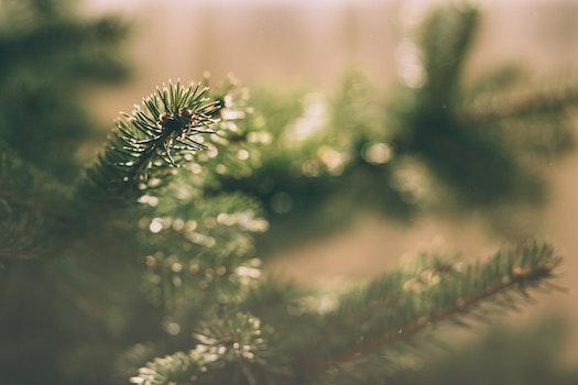 Kostenloses Stock Foto zu winter, verschwimmen, baum, grün