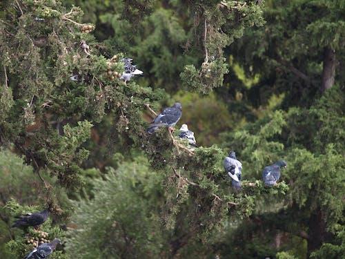 Ilmainen kuvapankkikuva tunnisteilla istuminen, Linnut, männyt, metsä