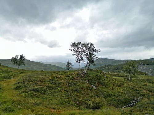 Foto profissional grátis de ambiente, árvore, azul, conhecimento