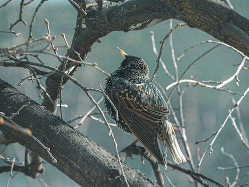 Kostnadsfri bild av 4k tapeter, fågel, hd, HD tapeter