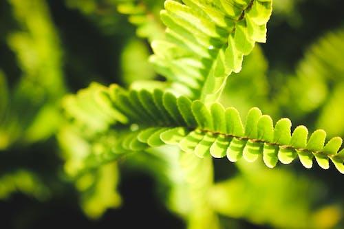 Ingyenes stockfotó absztrakt fotó, absztrakt háttér, absztrakt természet, green_world témában