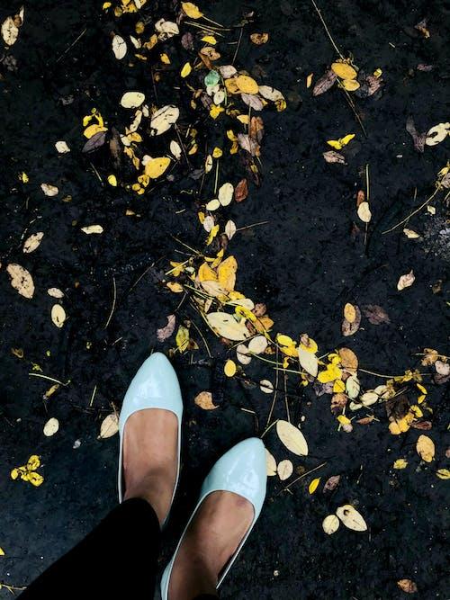 Gratis stockfoto met #mobilechallenge, ballerina's, druilerige dag, gedroogde bladeren