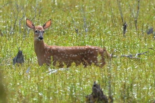 Foto stok gratis alam, binatang, ekor putih, kelinci betina