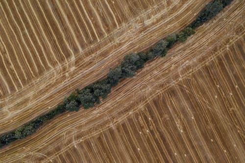 Aerial Photo of A Wall Of Trees Across Dry Plains