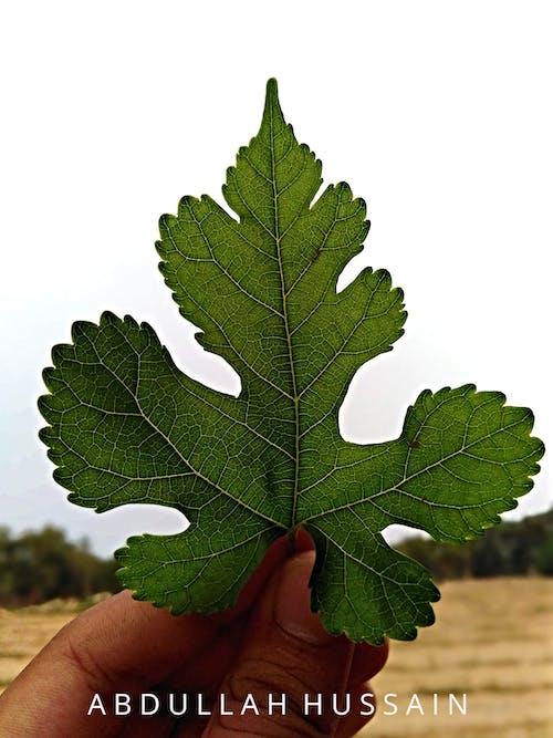Darmowe zdjęcie z galerii z # wiosna #leaf #nature