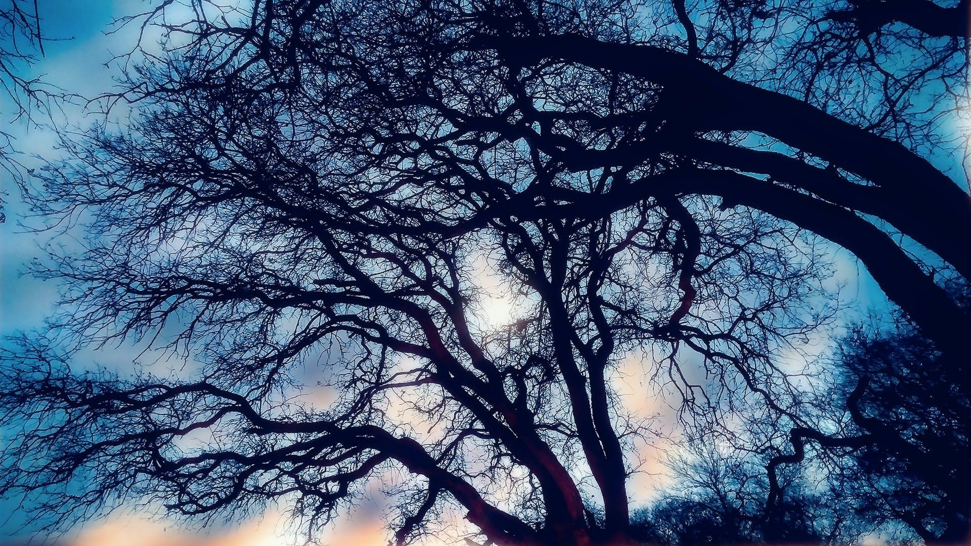branches, dark, eerie