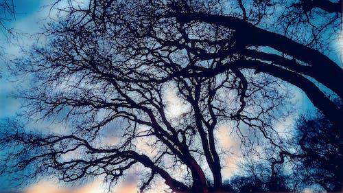 Foto profissional grátis de árvore, assustador, escuro, filiais