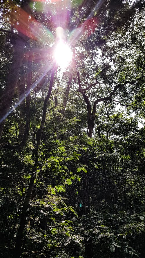 Foto d'estoc gratuïta de bosc, coberta forestal, raigs de sol, verd