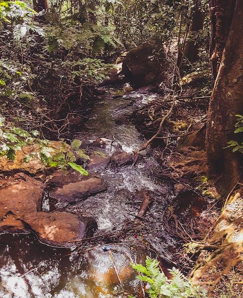 岩石, 森林, 森林覆盖, 水 的 免费素材照片