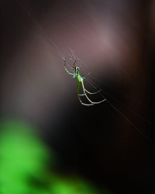 Бесплатное стоковое фото с красота в природе, макросъемка, максросъемка, паук