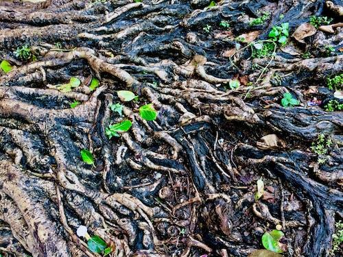 Kostenloses Stock Foto zu naturleben, wald, wild, wurzel