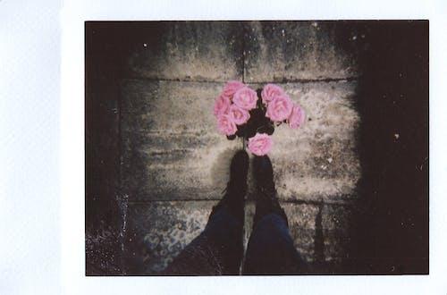 Rosa Blumen Auf Brauner Oberfläche
