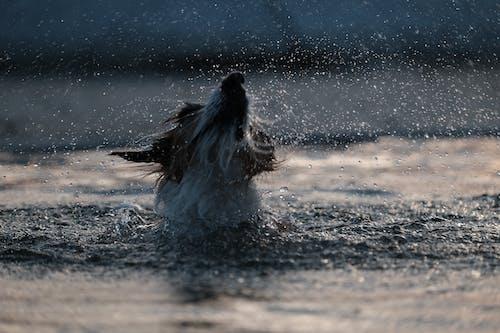 Gratis arkivbilde med basseng, dråpe, golden retriever, hund