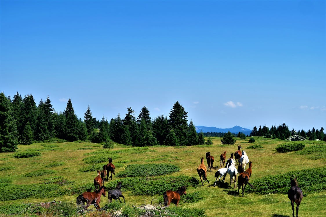 Horses Running on Grass Field Towards Trees