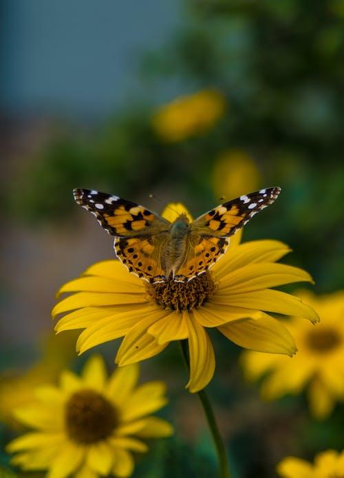 คลังภาพถ่ายฟรี ของ การถ่ายภาพธรรมชาติ, การออกเดินทาง, ดอกไม้สีเหลือง, ธรรมชาติ