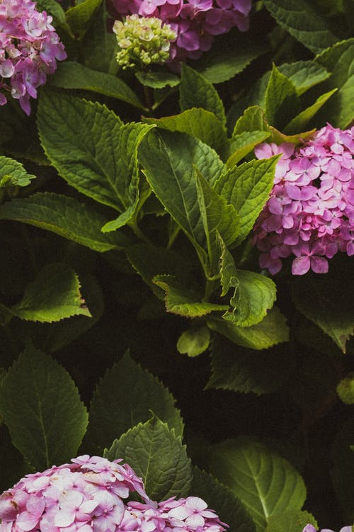 Closeup Photography of Purple Flowers With Green Leaves
