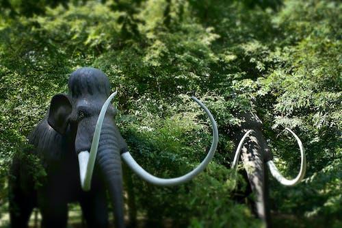 Immagine gratuita di estinto, mammut lanoso, mammuthus primigenius