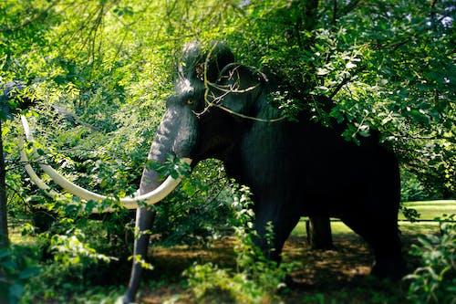 Ảnh lưu trữ miễn phí về loài tuyệt chủng, voi ma mút, động vật có vú