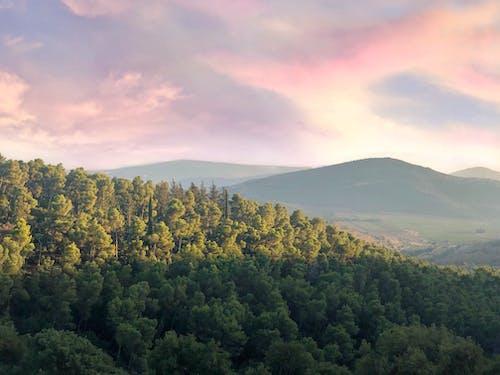 シルエット, パーク, 丘, 夏の無料の写真素材