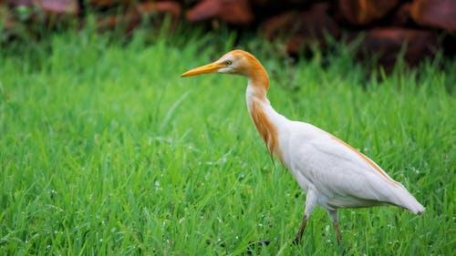Бесплатное стоковое фото с вид сбоку птицы, дикая природа, зеленая трава, наблюдение за птицами