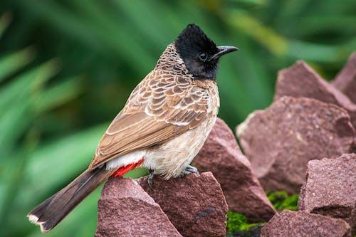 Бесплатное стоковое фото с кормушка для птиц, маленькая птица, птица, птица на скалах
