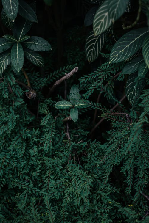Free stock photo of dark green plants, nature, wallpaper
