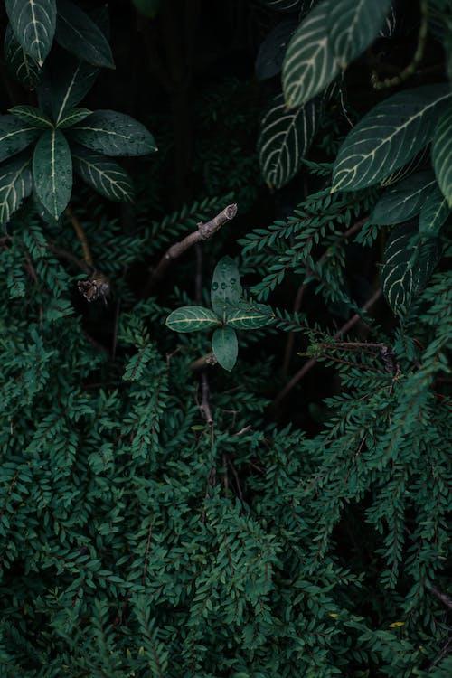 Free stock photo of dark green plants, nature, wallpaper