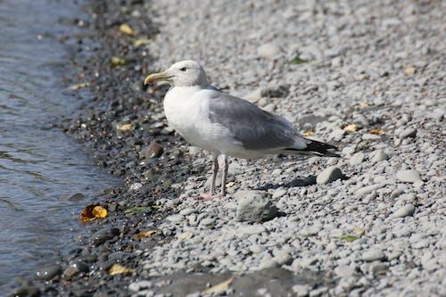 Ilmainen kuvapankkikuva tunnisteilla eläin, hiekkaranta, joki, lintu