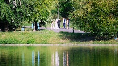 Darmowe zdjęcie z galerii z drzewa, jezioro, krajobraz, lato